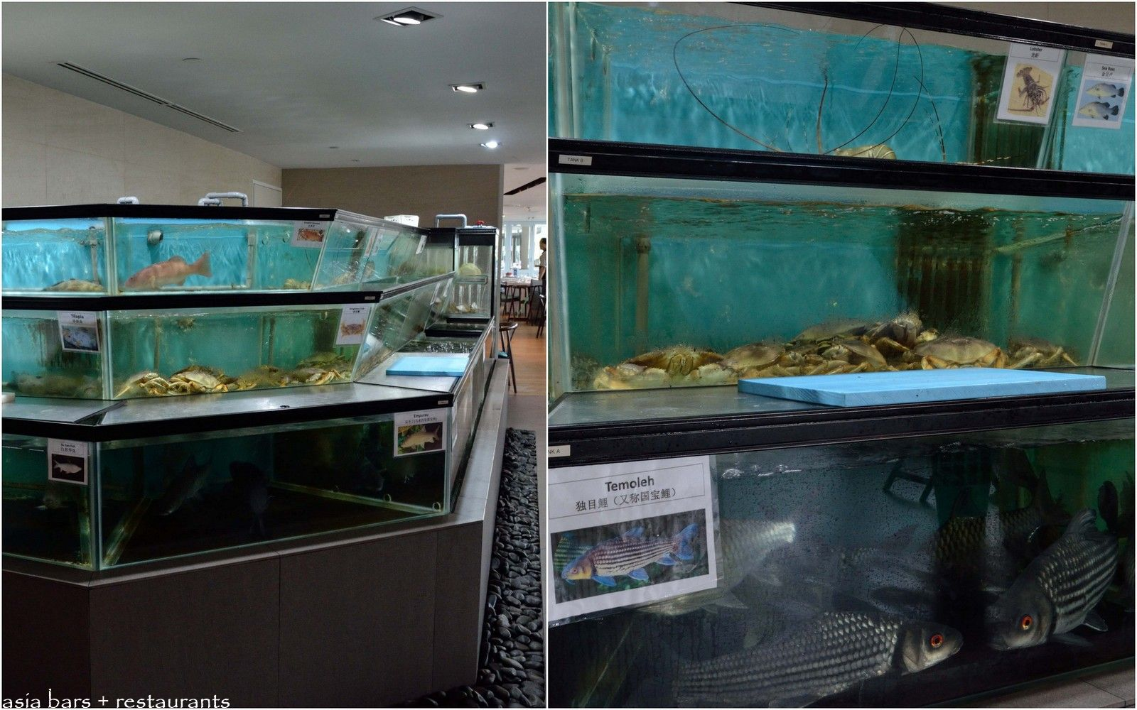 Majestic Bay- contemporary Chinese seafood restaurant ...